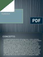 03. Anatomía Generalidades