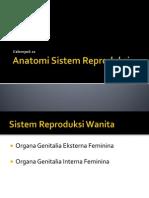 Anatomi Sistem Reproduksi