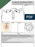 A2 Anatomie Femme