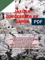 sakura-los-cerezos-en-japon-22033.ppt