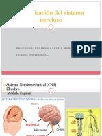 Organizacón Del Sistema Nervioso