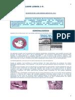 QUISTESMAX(2)2005.pdf