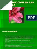 reproduccinenlasplantas-100503123321-phpapp01