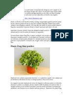 Plante Feng Shui Pozitive