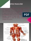 diapositivassistemamuscular-110905164727-phpapp02