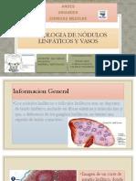 Histologia de nódulos linfáticos y vasos.pptx