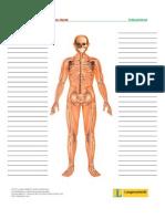 Treffpunktberuf Pflege-skelett Wortschatzliste
