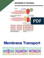 Lecture 2 - Membrane Transport