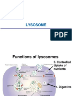 2014-07-09 Lecture 4 - Lysosome, Vacuole, Mitochondrion, Chloroplast (Posted)