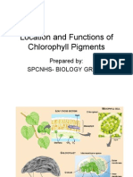 Location and Functions of Chlorophyll Pigments