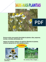 DIVERSIDADE PLANTAS