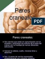 Parescraneales 120925195627 Phpapp02 (1)