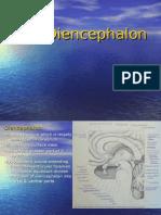 The Diencephalon