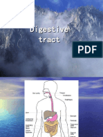 digestive tract and the tongue