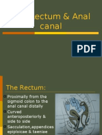 the rectum & anal canal