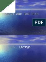 cartilage&bone