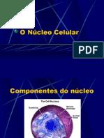 5583 o Nucleo Celular Portal 30 Maio