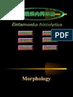 protozoa > amoebae > entamoeba