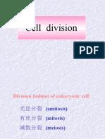 cel division