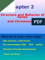 human genome