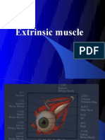 Extrinsic muscle