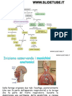 Anatomia Generale