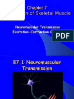 04.Neuromuscular Transmission