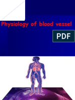 phy of blood vessels