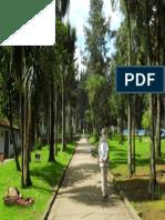 Camino en El Parque Nacional de Bogotá