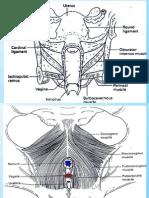 16-scannedGenitalProlapse
