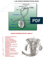 Unidad Viii-fisiologia Reproductiva Del Macho-2011-i