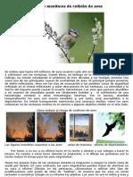 Aves que chocan contra las ventanas Chicago Bird Collision Monitors english espanol