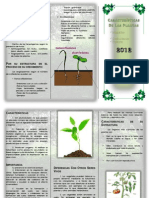 Características Generales de Las Plantas