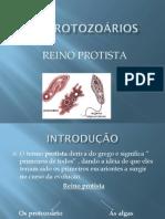 Slide Protista