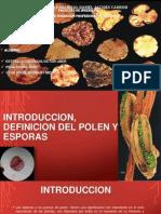 POLEN Y ESPORAS IMPRIMIR!!.pptx