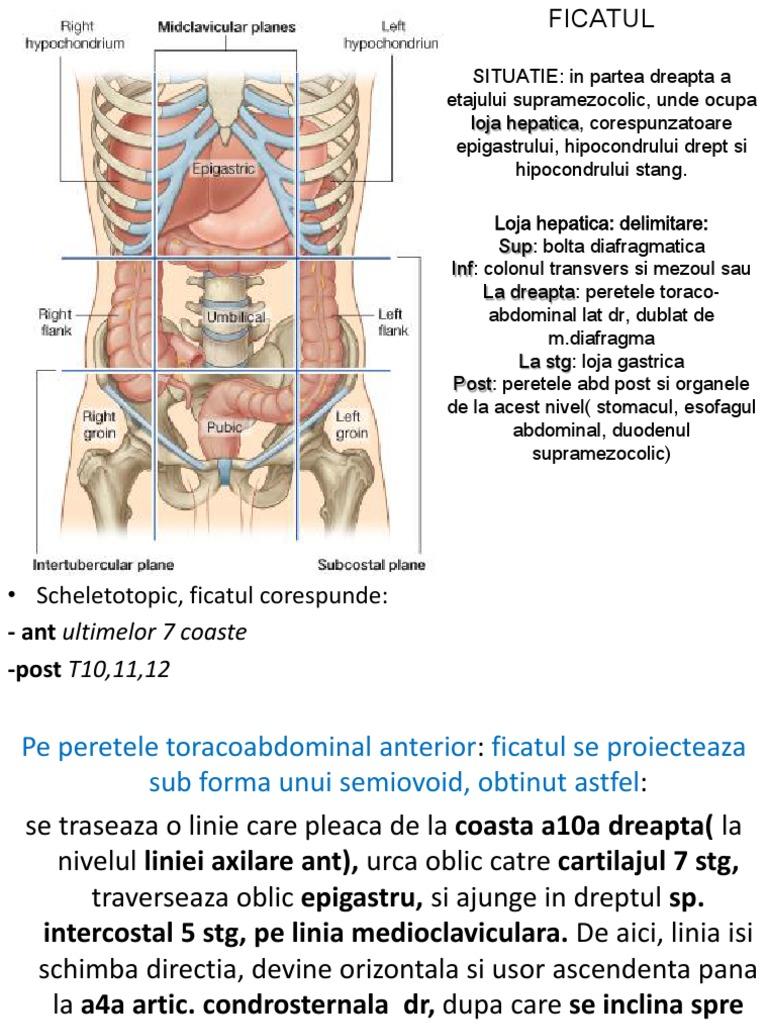 legatura dintre ficat si pancreas)