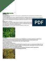 30 PLANTAS MEDICINALES.docx