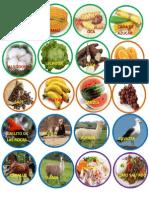 Productos de Las Regiones Del Peru