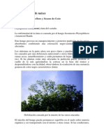 Ciclo Phytophthora