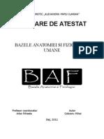 Documentatie Bazele Anatomiei Si Fiziologiei