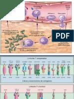 Respuesta Inmunologica Especifica