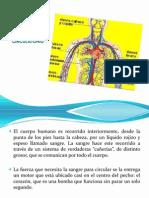 Tutoria Sistema Circulatorio