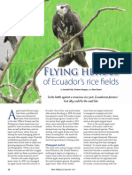 Rice Today Vol. 13, No. 3 Flying Heroes of Ecuador's rice fields