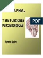 Glandula Pineal y Sus Funciones
