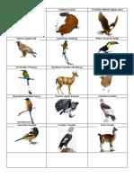 Animales de Cada Pais de America