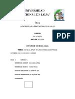 95309108 Informe de Botanica
