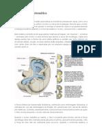 Transmissão automática.pdf