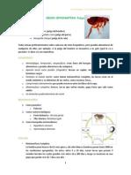 clase parasito 19 _ 11-01-12.docx