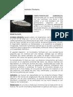 Platelmintos y Nematodos Tisulares.doc