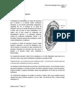 microbiologia clase 2 _ 10-11-11.docx